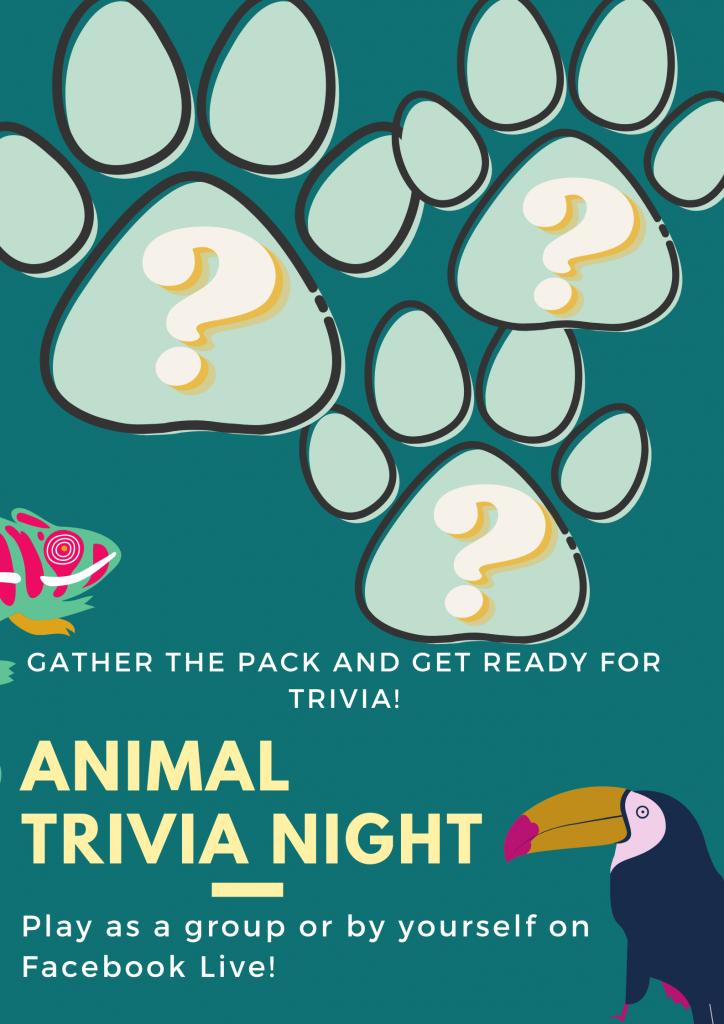 Teal Animal Welfare Awareness Campaign Poster (1)